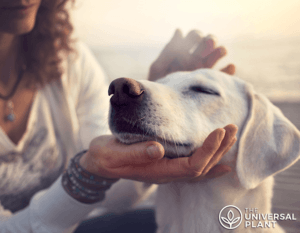 Woman considering CBD Oil For Dogs while petting her dog's face